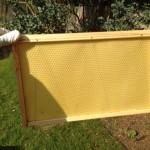 Super-beekeeping
