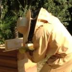 drbeekeeper-beekeeping
